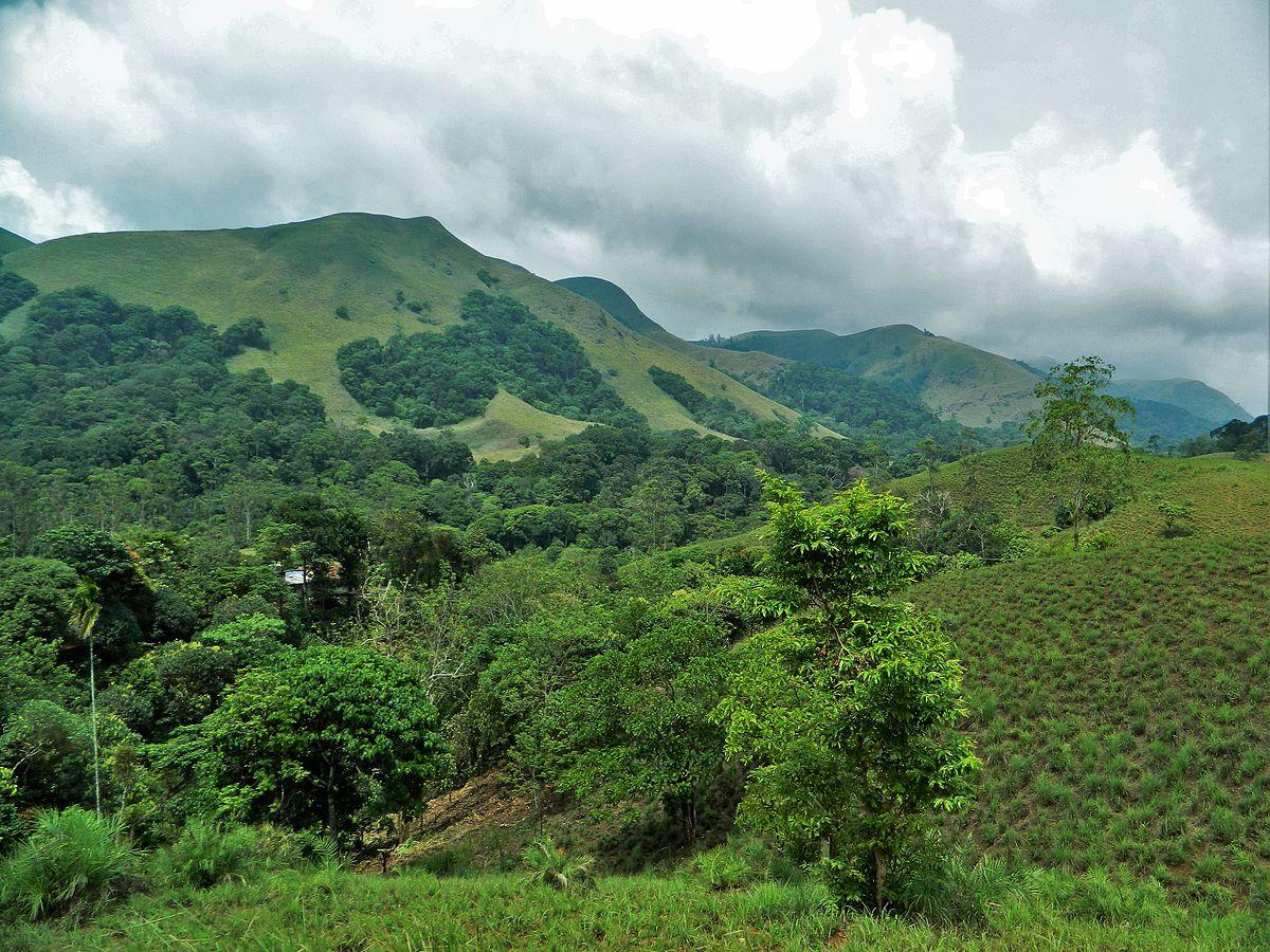 Shola Forest