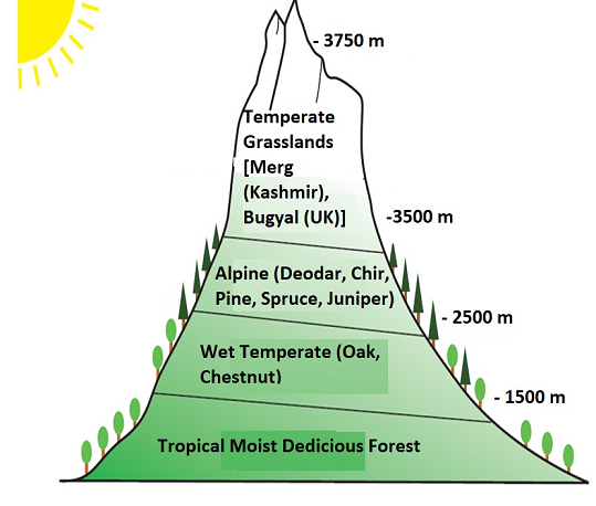 Northern Mountain Forest, Soils of India